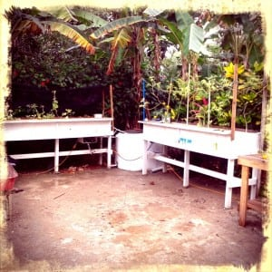 Building an Aquaponics system