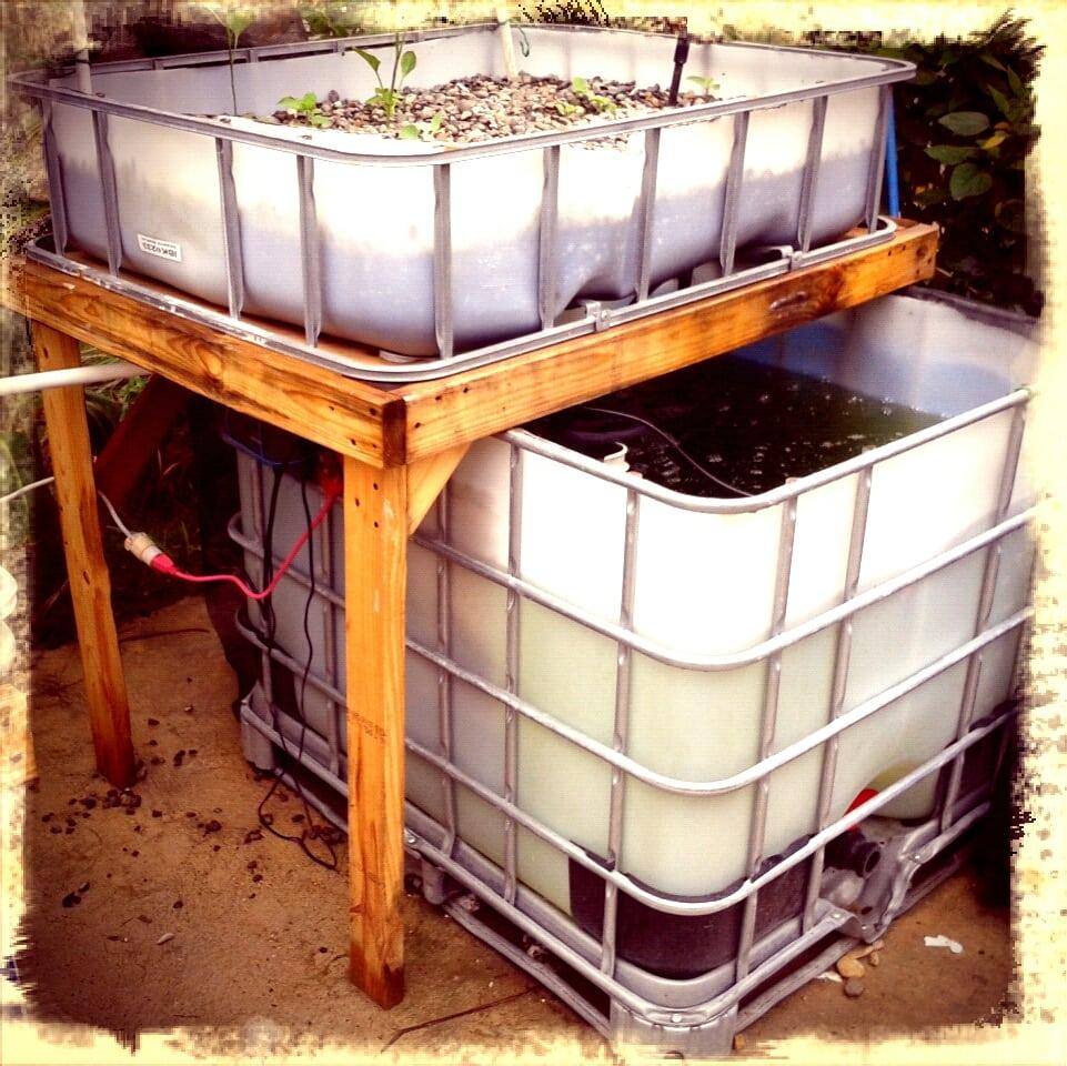 building an aquaponics system