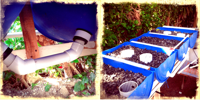 Aquaponic systems in the Dominican Republic