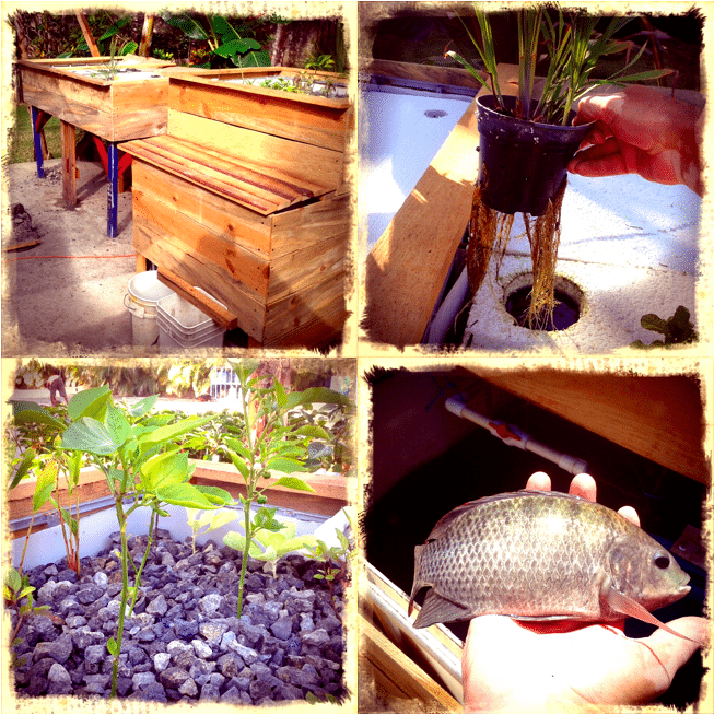 Aquaponics Systems in the Dominican Republic