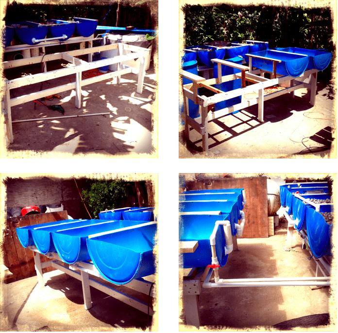 Aquaponics System, Cabarete