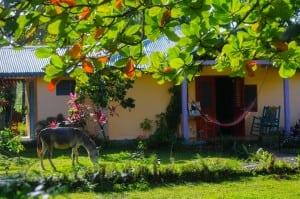 Fata Morgana Hostel in Las Terrenas