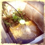 aquaponics system in the dominican republic