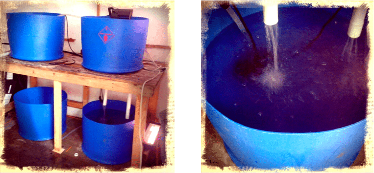 How to build an aquaponics system