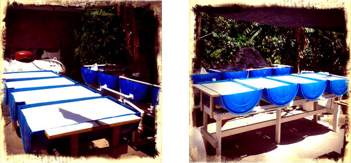 Aquaponics sytem in the Dominican Republic
