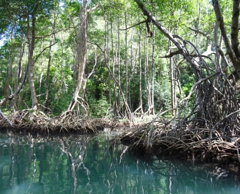 Mangrove Ecosystems and their Superpowers