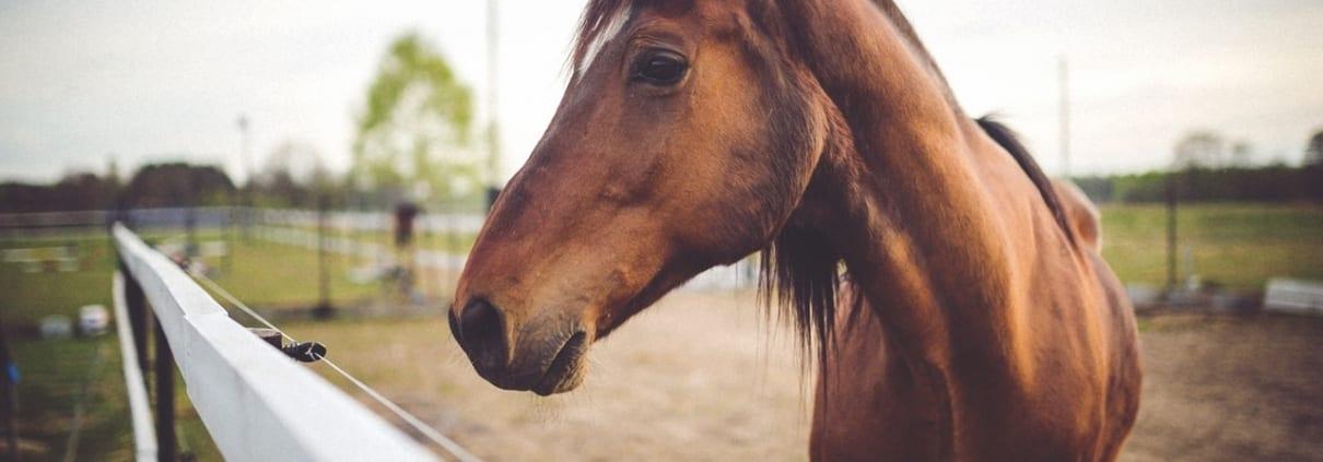 Your Cabarete Healthy Horse Checklist