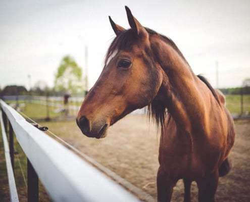 Your Cabarete Healthy Horse Checklist