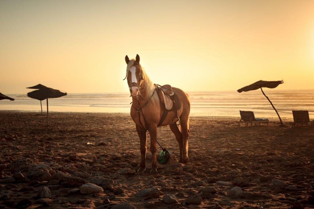 The Myriad Benefits of Horseback Riding