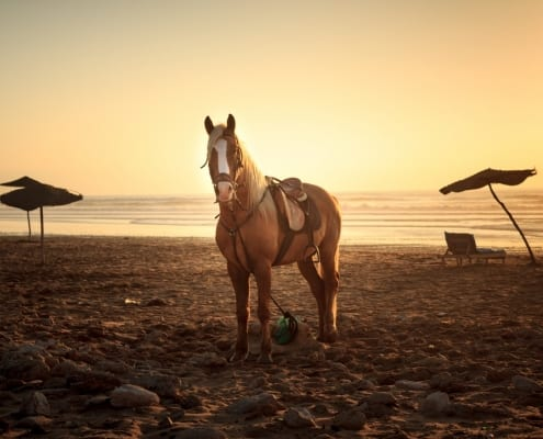 The Myriad Benefits of Horseback Riding